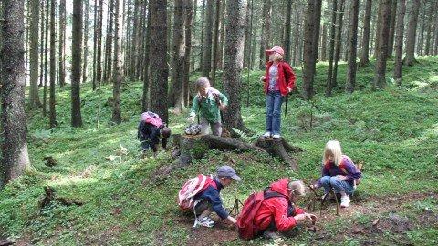 Kinderclub Wandern Wald